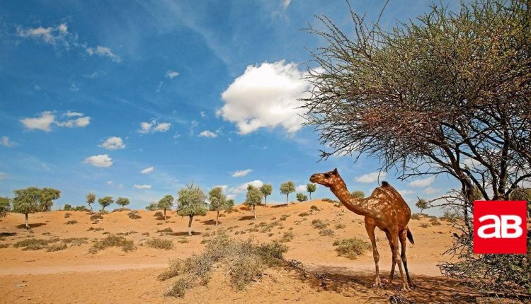 Top five things for visitors to do in Ras Al Khaimah_5f804f2b002fa.jpeg